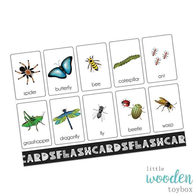Letter Basics Flash Cards